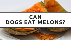Can Dogs Eat Melons?