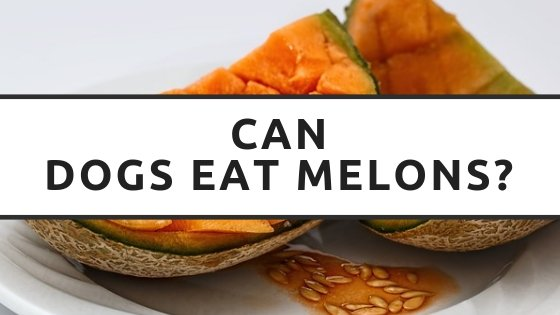 can dogs eat melons