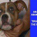 "Abused & Abandoned: ""Brad Pitt"" The Pitbull"