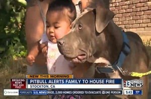 Pitbull Alerts Owner And Starts Dragging Baby From Developing Fire