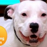 """Sweet Dog Dumped And Abandoned """"Snoop"""" the Dog"""