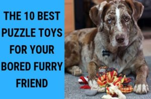 The 10 Best Puzzle Toys for Your Bored Furry Friend