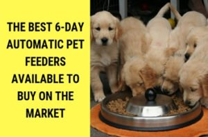 The Best 6-Day Automatic Pet Feeders Available to Buy on the Market