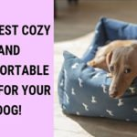 The Best Cozy and Comfortable Beds for Your Dog!