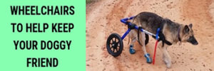 Top 5 Best Dog Wheelchairs To Help Keep Your Doggy Friend Comfortable
