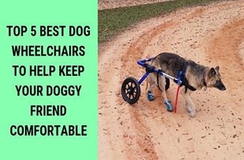 top 5 best dog wheelchairs to help keep your doggy friend comfortable fi