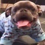 Dog Lover Sees Past The Deformities Of A Sweet Little Pitbull