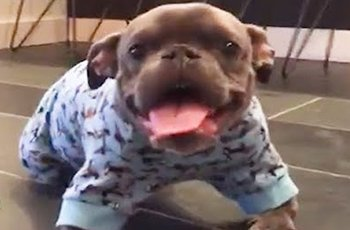 dog lover sees past the deformities of a sweet little pitbull fi