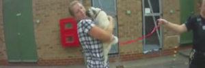 Lola The Pug: Stolen During Burglary