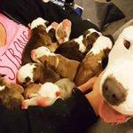 Poignant Story of Pregnant Pitbull Rescued