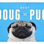 Doug the Pug: Famous Worldwide and the King Of Pug Pop-Culture!