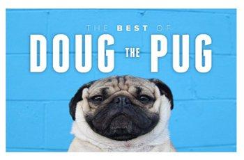 doug the pug famous worldwide and the king of pug pop culture fi