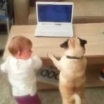 Pug Joins His Toddler Sister in Skype Call To Their Dad on Laptop