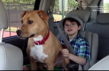 puppy on the brink of death breaks the barrier of autism in little boy fi