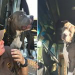 UPS Driver Falls in Love With Customer's Pit Bull