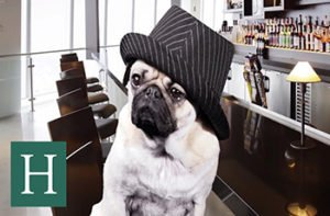 9 Things You Shouldn't Do Unless You're A Pug!