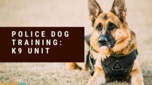 Police Dog Training: K9 Unit