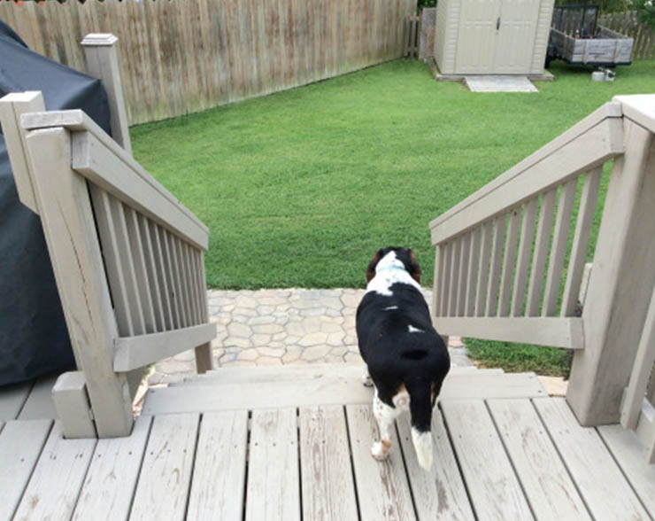 dog going down the stairs