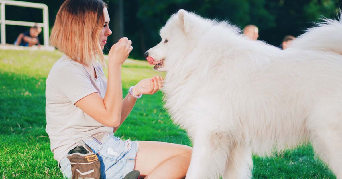 medical conditions of samoyeds