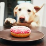 Useful Tips on How to Entice a Picky Dog Eat His Food