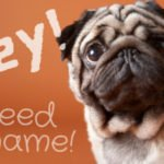 Pug Names That Are Really Cool