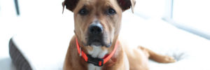 How to Choose the Most Comfortable Dog Collar Out There