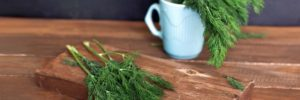Can Dogs Eat Dill – Herbs and Canines