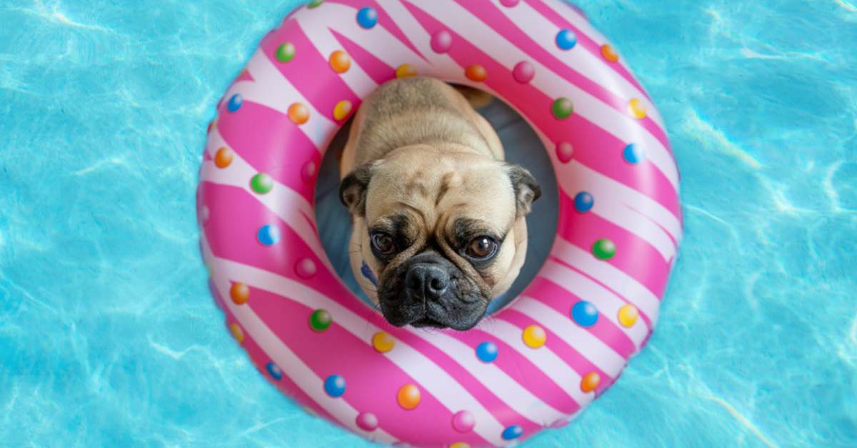facts about the pug breed