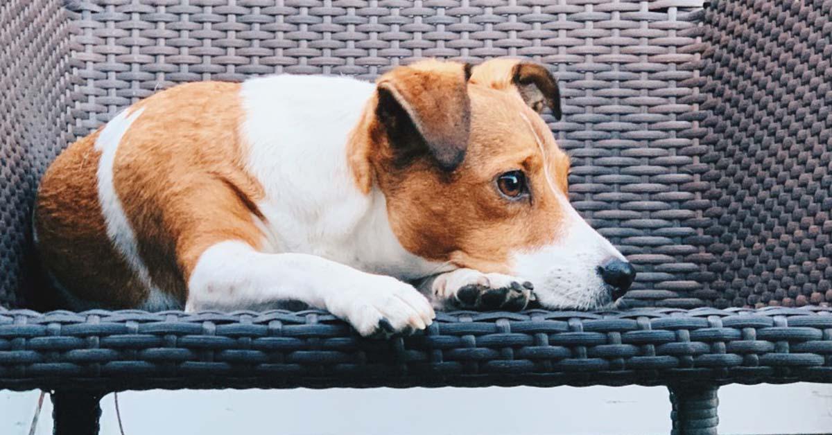 is it dangerous to give my dog ham bone