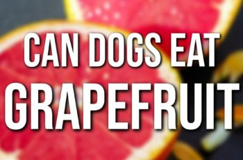can dogs eat grapefruits