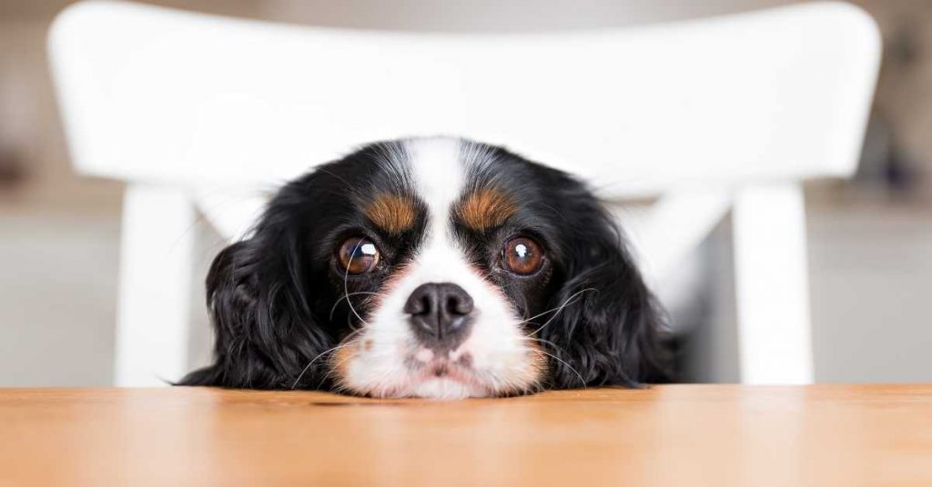 is ketchup safe for dogs